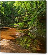 Wading In The Creek Canvas Print