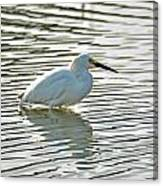 Wading Snowy Egret Canvas Print