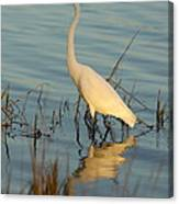Wading The Pond Canvas Print