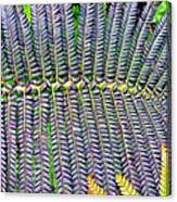 Waikamoi 32 Canvas Print