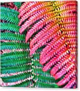 Waikamoi 47 Canvas Print