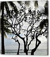 Waikiki Beach Hawaii Usa Canvas Print