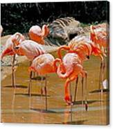 Waikiki Flamingos Canvas Print