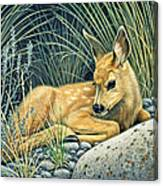 Waiting For Mom-mule Deer Fawn Canvas Print