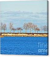 Waiting For Summer - Trees At The Edge Canvas Print