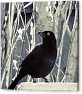 Waiting Grackle Canvas Print