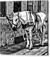Waiting In The Alleyway Canvas Print