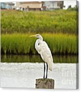 Waiting On Dinner Time Canvas Print