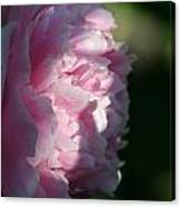 Wake Up Pink Peony Canvas Print