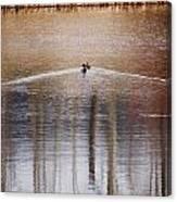 Waking Ducks Canvas Print