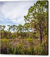 Walk Among The Pines Canvas Print