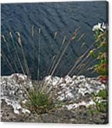 Flowers In Rock Canvas Print