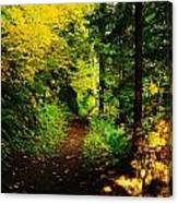Walking An Autumn Path Canvas Print