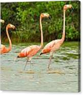 Walking Flamingos Canvas Print