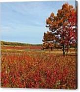 Walking In Big Meadow Canvas Print