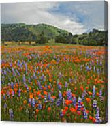 Walking In The Wildflowers Canvas Print
