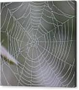 Walking Into Spiderwebs Canvas Print