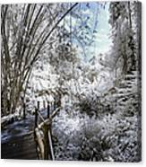 Walking Into The Infrared Jungle 2 Canvas Print
