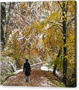Walking Into Winter - Beautiful Autumnal Trees And The First Snow Of The Year Canvas Print