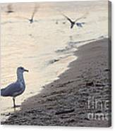 Walking On The Beach Canvas Print