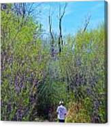 Walking The Ox Bow Canvas Print