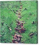 Walking The Path Less Traveled Canvas Print