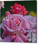Walking Through The Rose Garden Canvas Print
