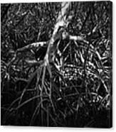Walking Tree Number 2 Canvas Print