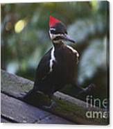 Walking With A Waddle Canvas Print