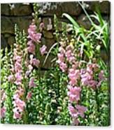 Wall Of Snapdragons Canvas Print