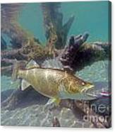 Walleye Pike And Dardevle Canvas Print