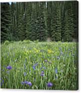 Wallowa Wildflowers Canvas Print