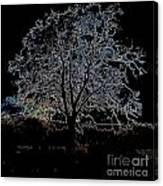 Walnut Tree Series Glowing Edges Canvas Print
