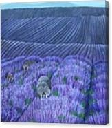 Walruses In A Field Of Lavender Canvas Print