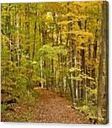 Wandering Trail 6 Canvas Print