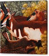 Wanta Race Canvas Print