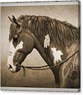 War Horse Old Photo Fx Canvas Print