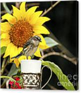 Sunflower And Warbler Bird Canvas Print
