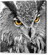 Watching You Owl Canvas Print