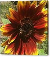 Warm Sun Flower Canvas Print