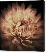 Warmth Of A Dahlia Canvas Print
