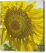 Warmth Upon My Back - Sunflower Canvas Print