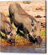 Warthog Family Canvas Print