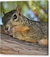 Wary Squirrel Canvas Print