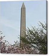 Washington Monument With Cherry Blossom Canvas Print