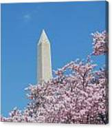 Washington Monument With Cherry Blossoms Canvas Print