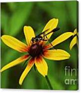 Wasp On A Susan Canvas Print
