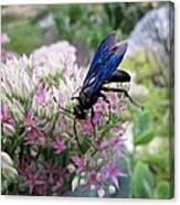 Wasp On Sedum Canvas Print