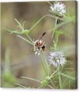 Wasp Variety Canvas Print