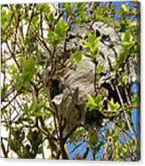 Wasps' Nest Canvas Print